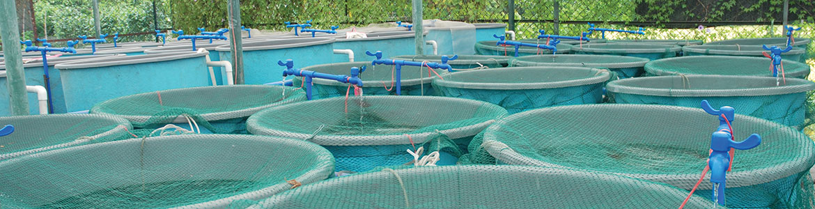 Aquaculture industry tanks